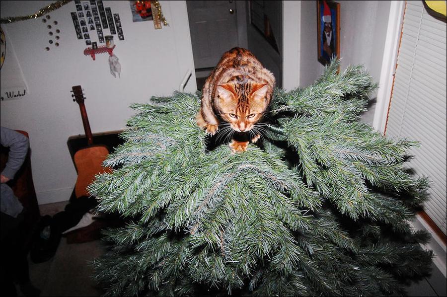 где поставить елку