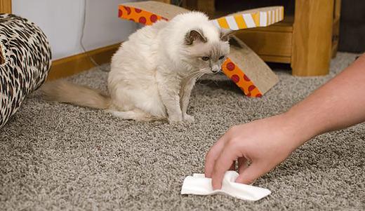 запах кошачьей мочи